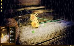 细雨与花朵xp主题