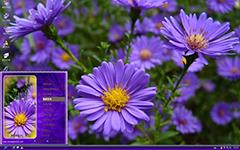 唯美紫色雏菊XP主题