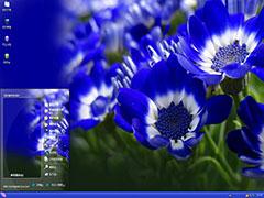 养眼清新蓝菊xp主题