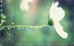 白色的花儿12月日历Win7主题