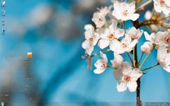 清新养眼的白色花朵Win7主题
