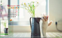 猫咪与花唯美9月日历Win7主题