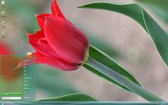 火红的花朵清新摄影Win7主题