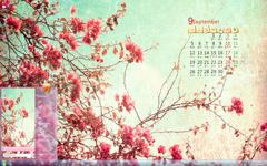 三角梅9月简约日历Win7主题