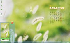 清新的狗尾巴草5月日历Win7主题